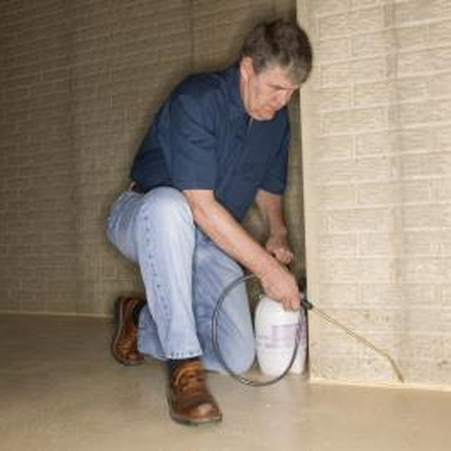 How To Remove Black Mold From A Basement
