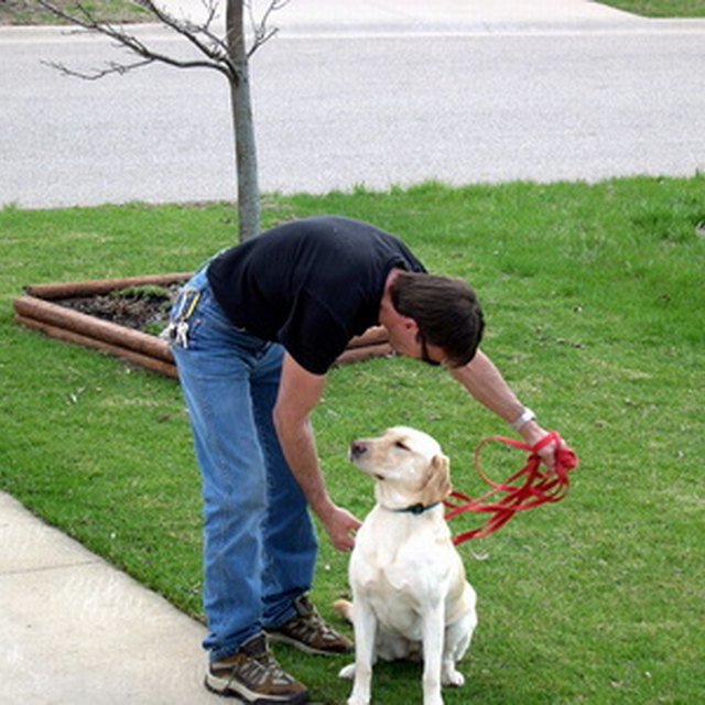How to Volunteer for Service Dog Training