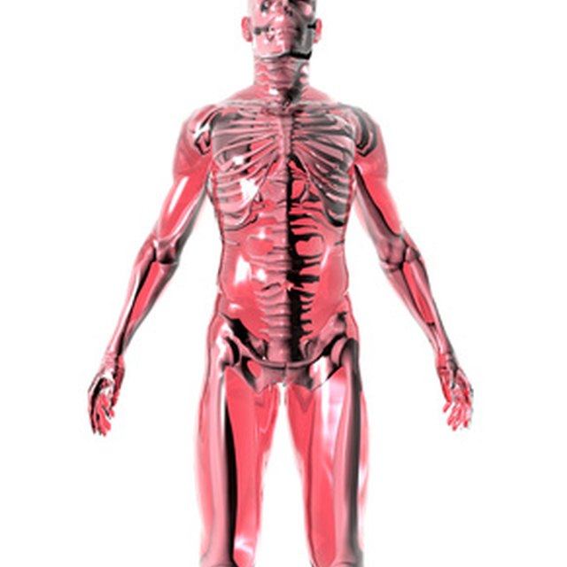 Tips for Students on Studying Human Anatomy