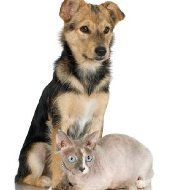 Can Cat Feces Carry Diseases Harmful To Dogs Dog Care Daily Puppy