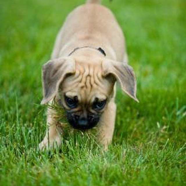 Is It Harmful For A Dog To Eat Cat Feces