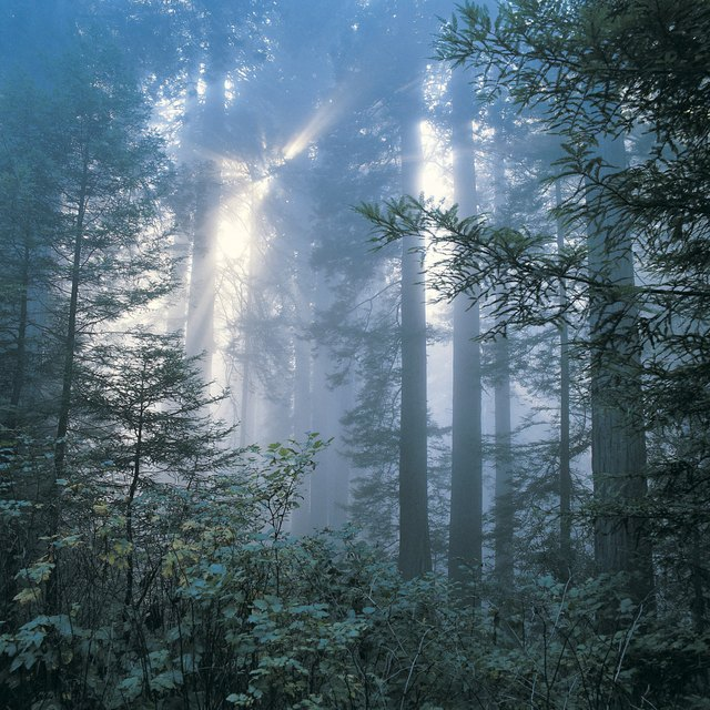 Environmental Problems in Temperate Deciduous Forests