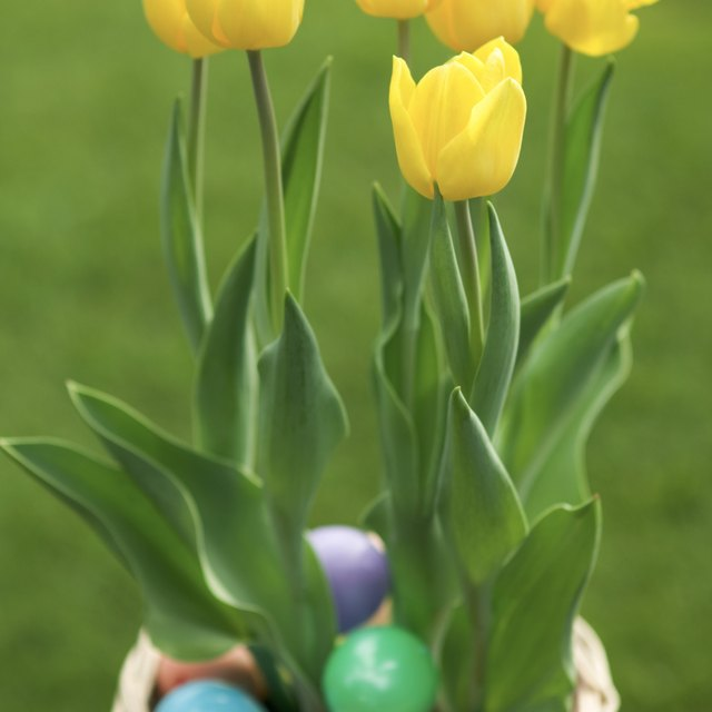 The Religious Meaning of Easter Flowers