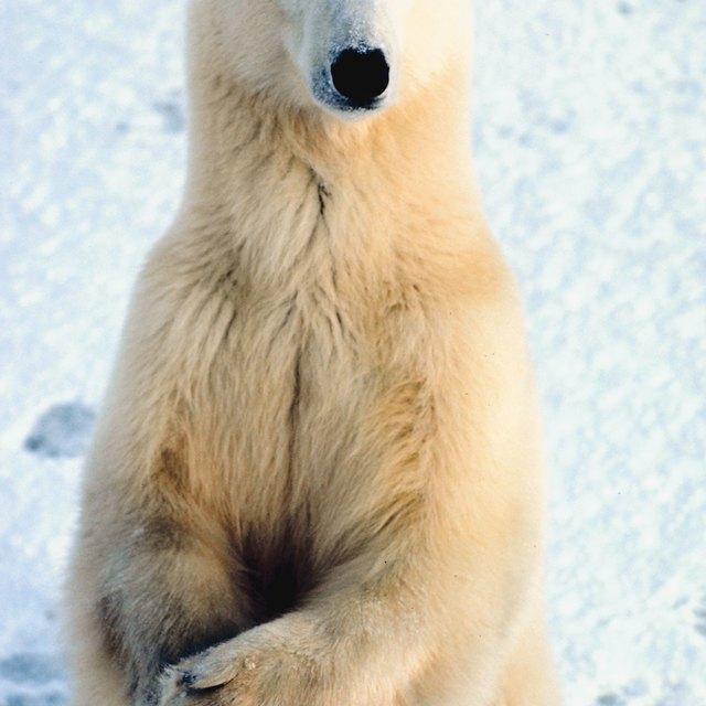 Teaching About Polar Animals in Kindergarten