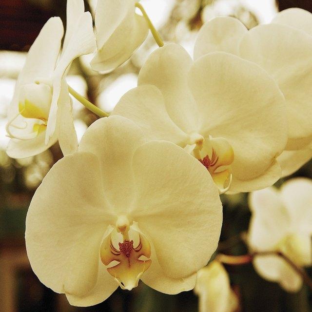 Flowers That Symbolize Death