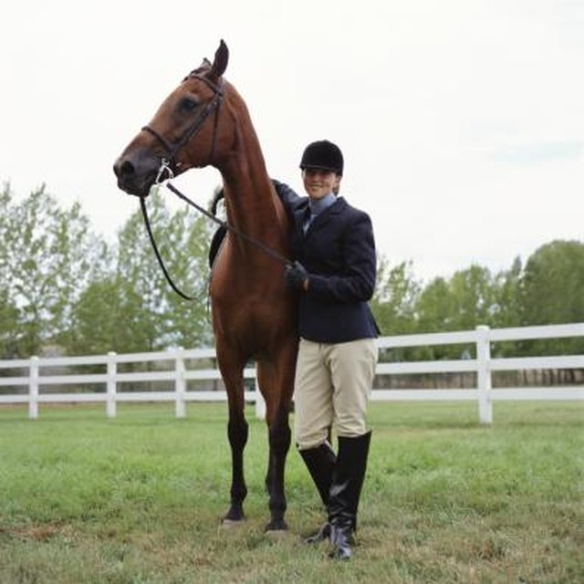 Tax Deductions for Breeding Stallions