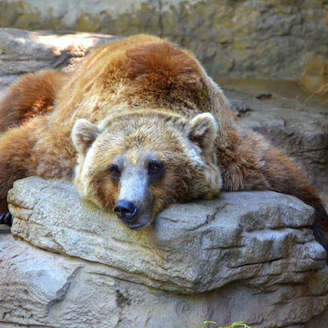 Fun Facts About Hibernation and Bears for Preschoolers ...