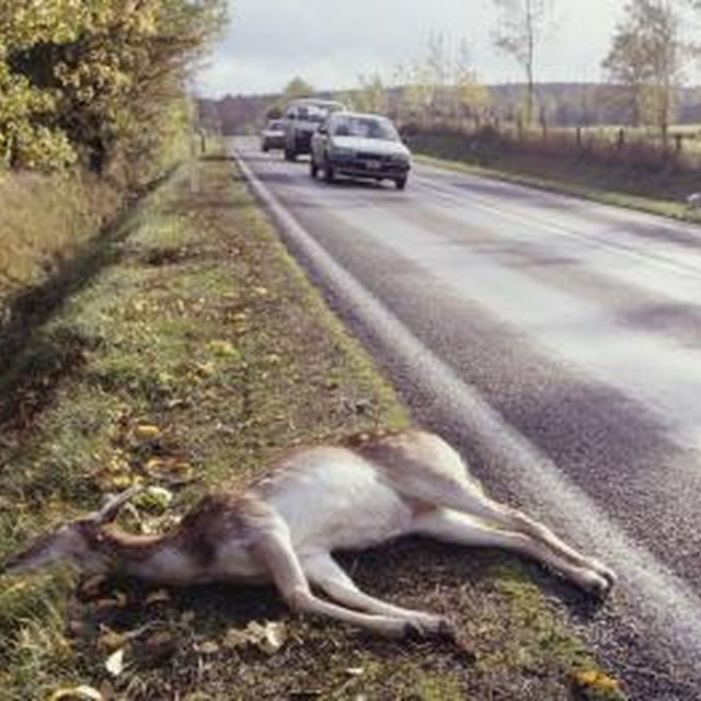 Does Liability Insurance Cover Deer Car Accidents?