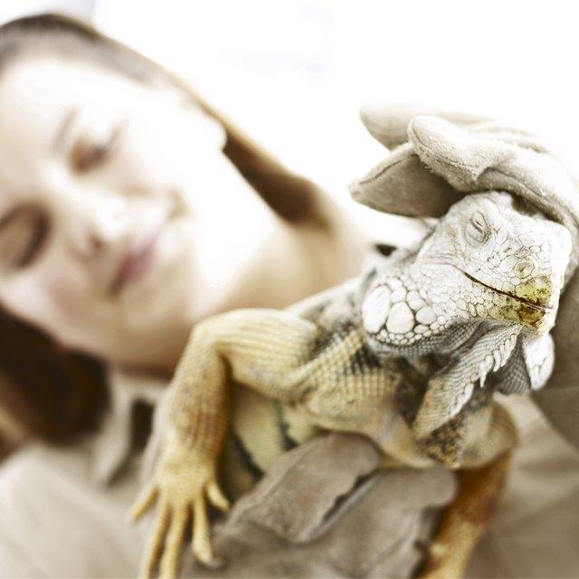 Zoologist Schools