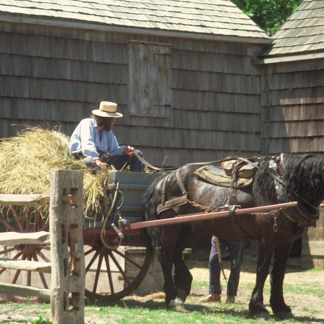 Amish Herbal Healing