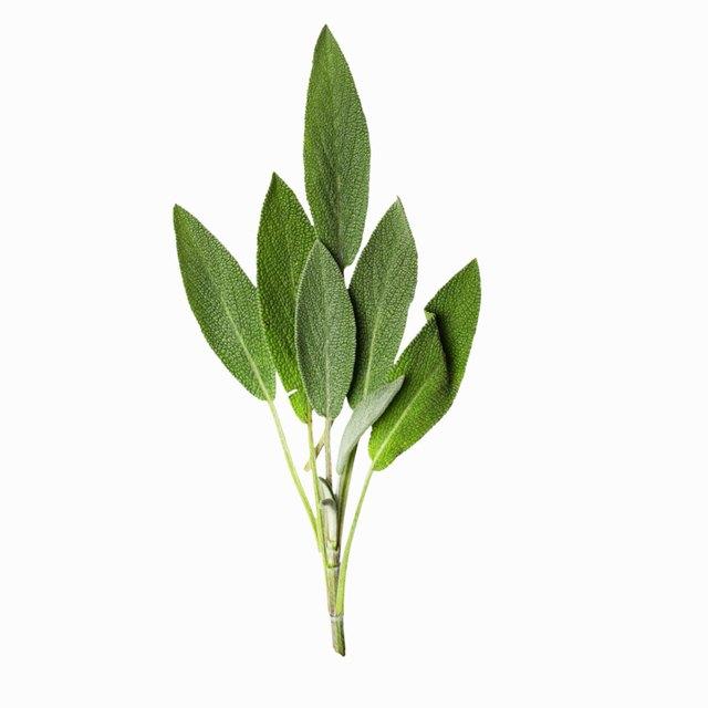 How Long Should One Keep Sage Tea on Grey Hair?   LEAFtv