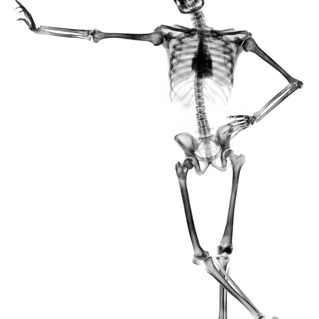 Four Structural Roles of the Skeletal System