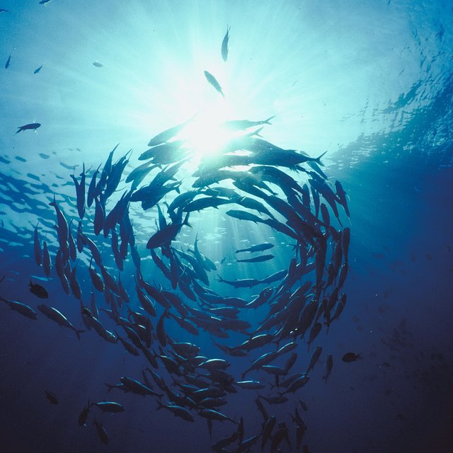 What Is the Difference Between Aquatic Biology & Marine Biology Majors?