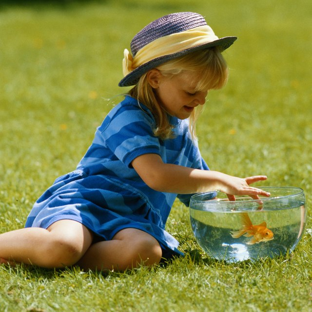 How to Teach About Fish in Kindergarten