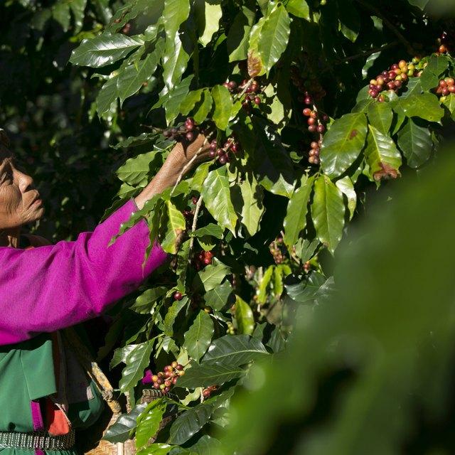 Fair Trade Pros & Cons