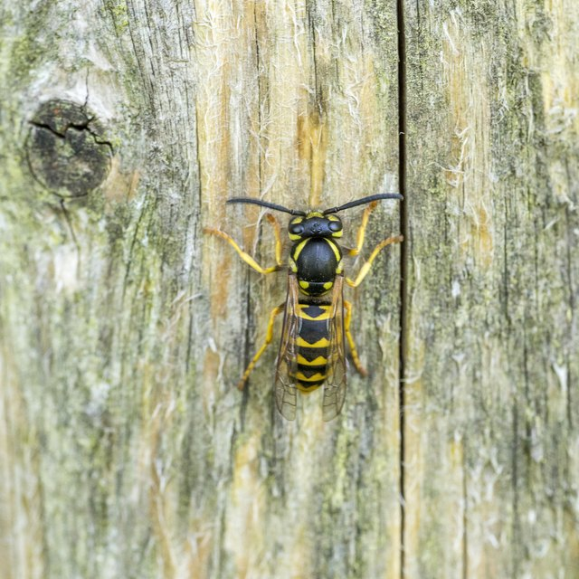 List of Nocturnal Flying Insects | Sciencing - photo#15