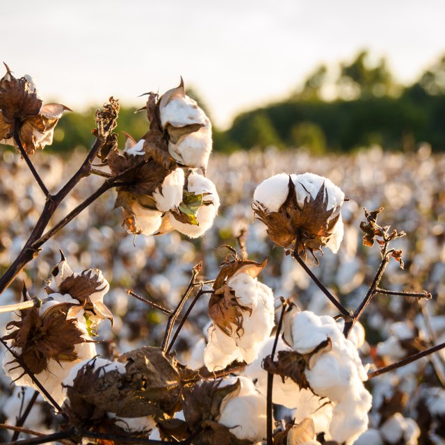 Stages of the Cotton Manufacturing Process