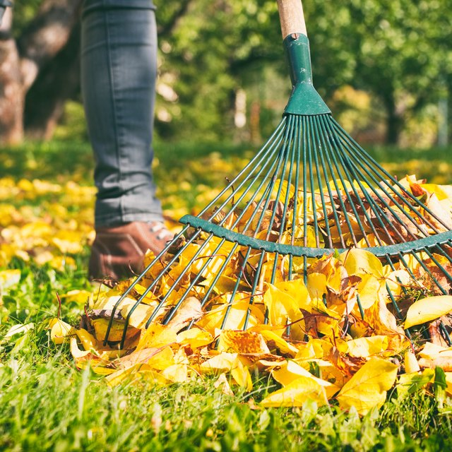 How Much Should I Charge to Rake Leaves?