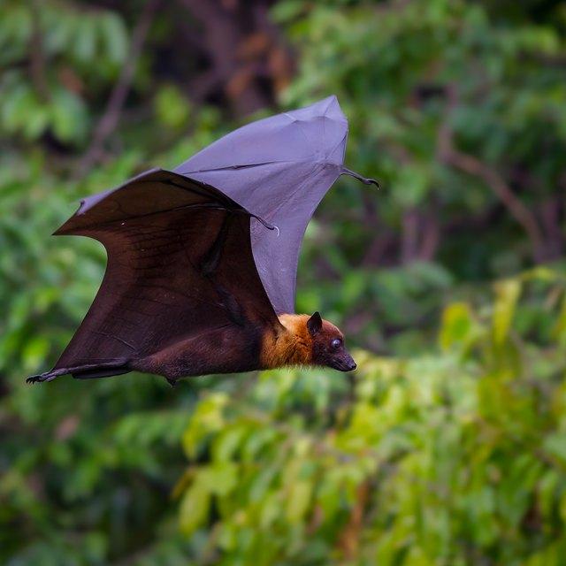 Animals That Use Echolocation