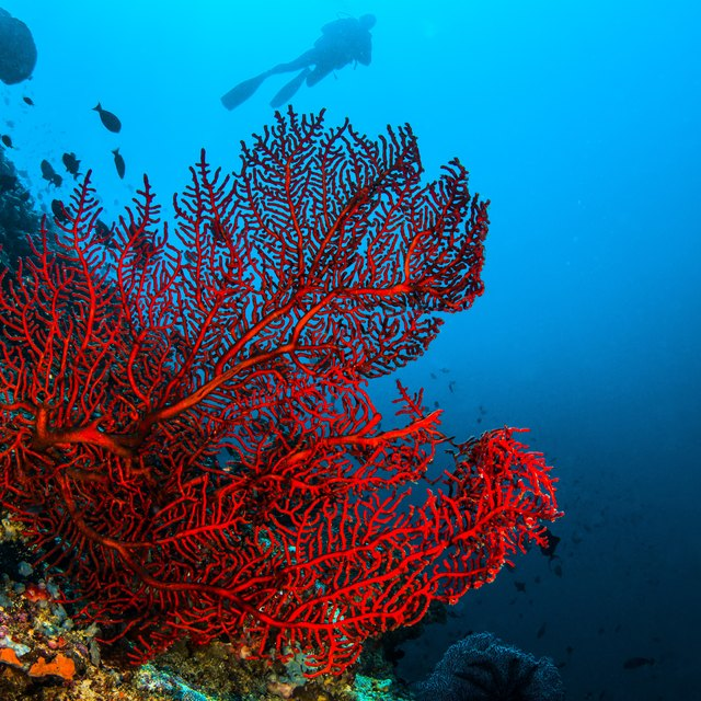 What Is The Major Primary Producer In The Marine Ecosystem