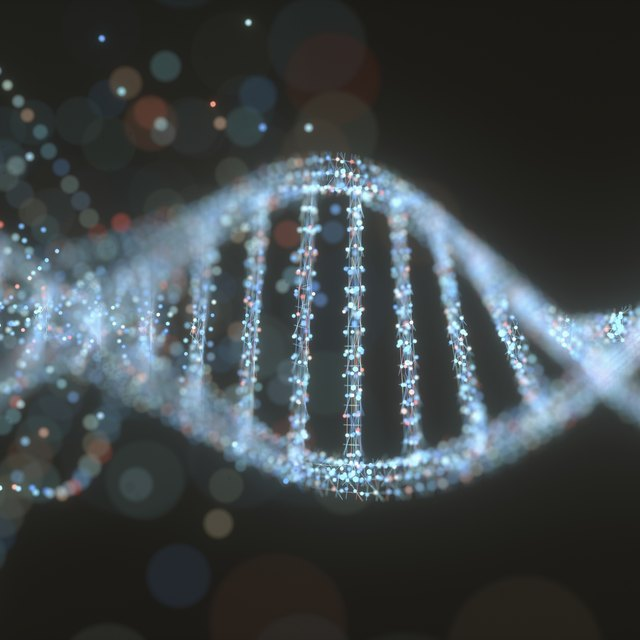 what is the function of mrna in translation