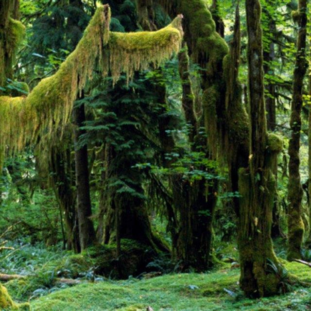 rainforest biotic factors