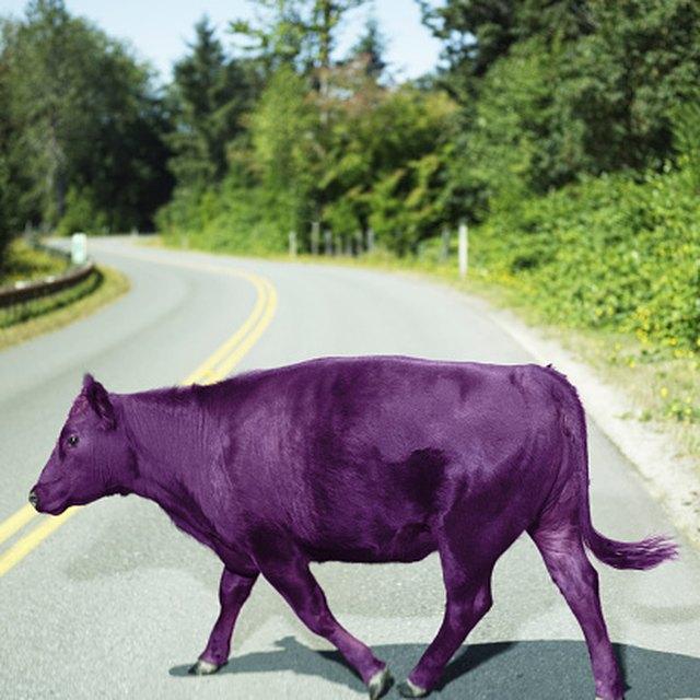 Cattle Grants