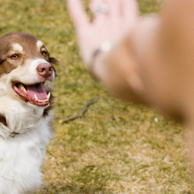 Financial Aid to Become a Dog Trainer