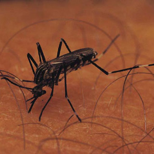 How to Prevent Mosquito Bites While Sleeping