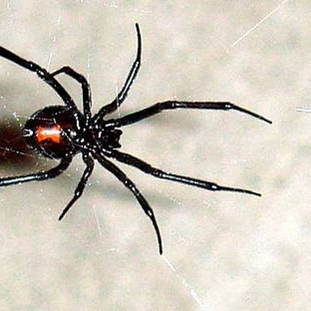 The Differences Between Male Female Spiders Sciencing