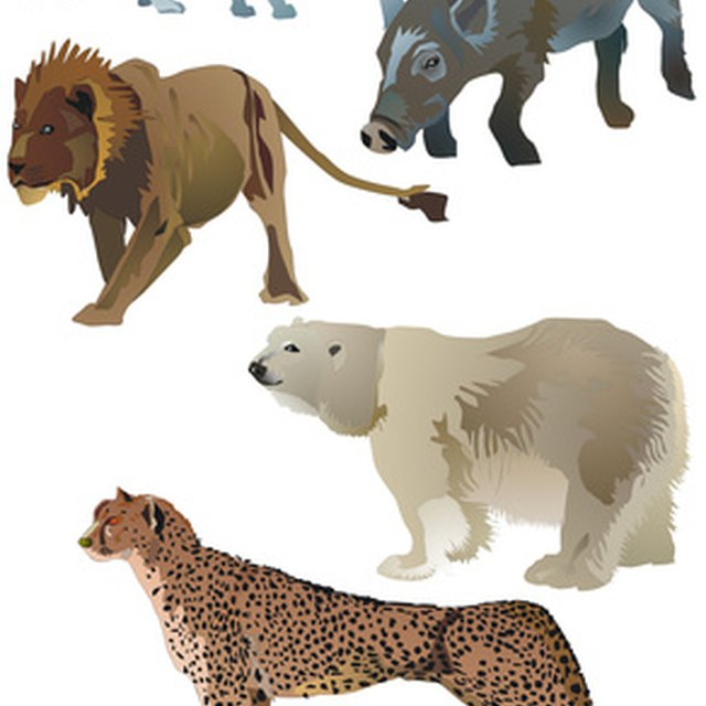 Names of Endangered Animals