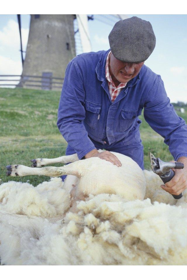 How to Hand-Shear a Sheep