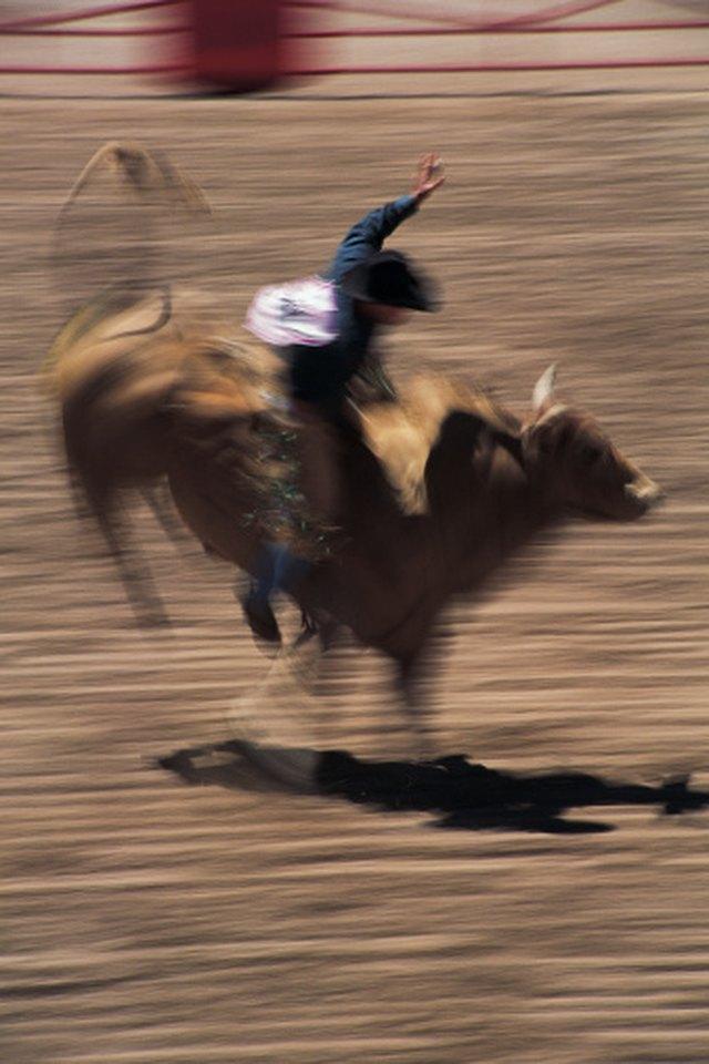 The Best Bucking Bull Breeds