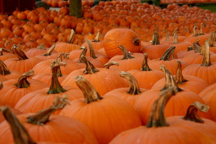 Feeding Canned Pumpkin to Cats or Dogs