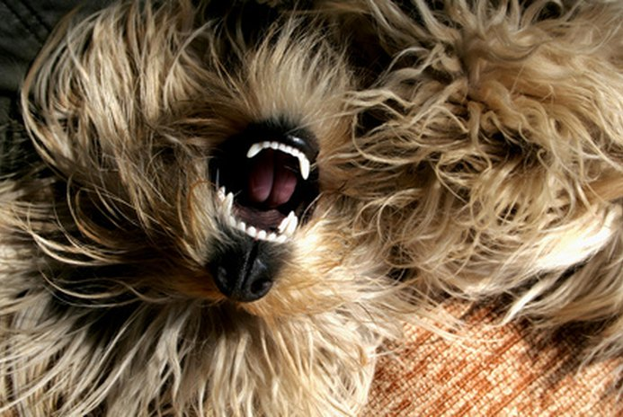 Dental Care for Dogs: Brushing a Dog's Teeth to Stop Bad Dog Breath