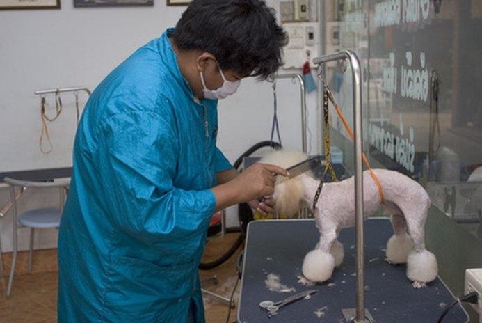 Grooming Needs of Poodles