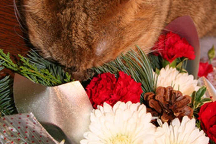 Cats & Chrysanthemum