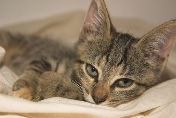 What Do I Do if My Kitten Is Hiding?