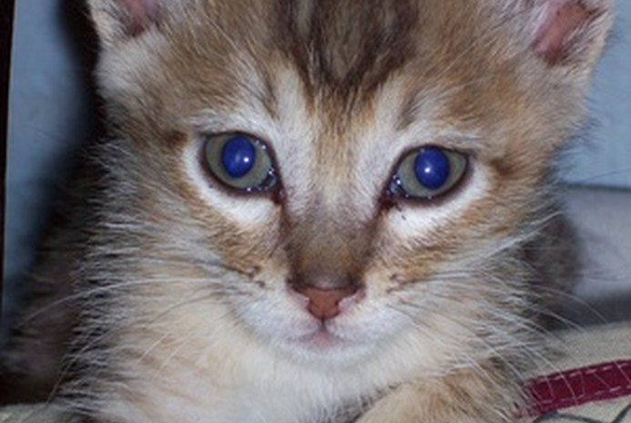 Is Clumping Litter OK for Kittens?