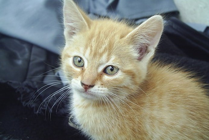 About Deworming Medicine for Kittens