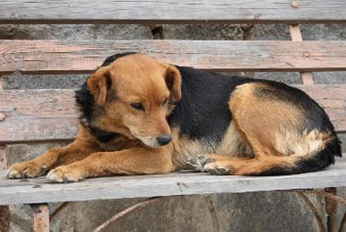 How to Make a Scared Dog Not Scared Anymore