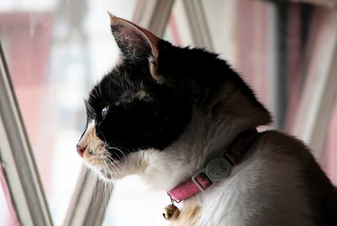Is It Cruel to Keep a Cat Indoors?