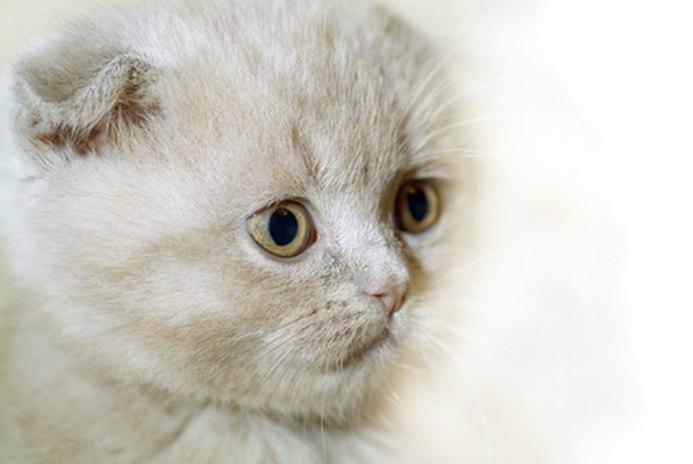 Kitten & Sneezing