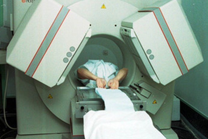 MRI Scans for Dogs