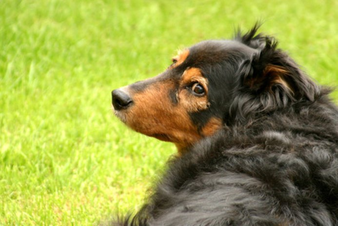 How to Neutralize Your Lawn From Dog Urine Damage
