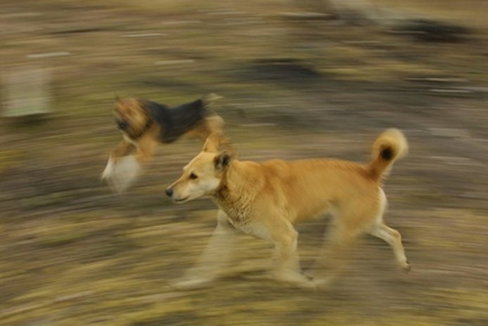 How to Train an Aggressive Dog to Be Nice to Other Dogs