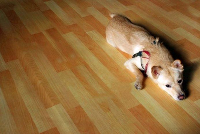 The Best Hardwood Floor for Dogs