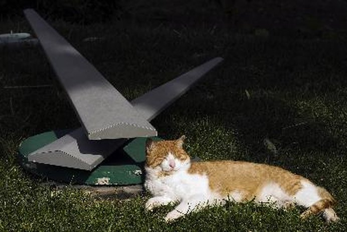 How To Keep Stray Cats From Spraying a Yard