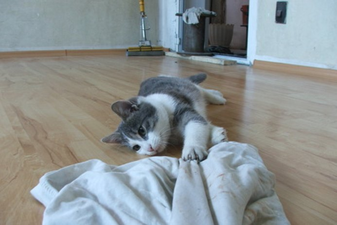 How to Remove Cat Urine From Laminated Floors