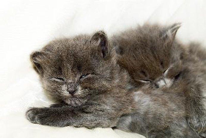 Adopting Two Cat Siblings